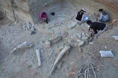 Investigadoras del CENIEH y del TOPPP documentando los restos de Palaeoloxodon recki hallados en Thiongo Korongo (TK)
