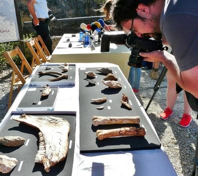 Fósiles encontrados durante la campaña de excavación