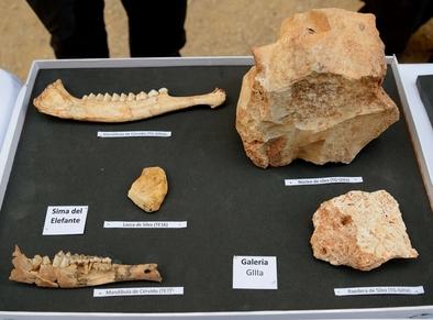 Algunos de los fósiles descubiertos en la Sima del Elefante y Galería