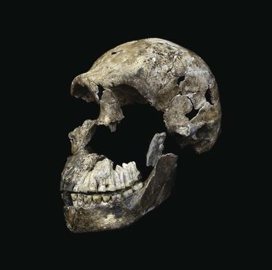 Neo, el cráneo de Homo naledi descubierto en la cavidad Lesedi.