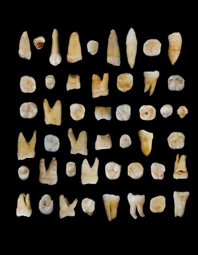 Dientes humanos encontrados en la cueva de Daoxian, al sur de China.