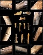 ¿Cómo era la dieta del ser humano a finales del Pleistoceno?