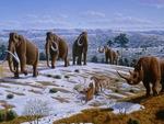 Mamuts y rinocerontes lanudos habitaron el noreste peninsular hace más de 40 mil años