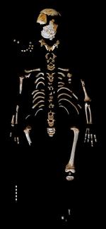 Así se desarrollaba un niño neandertal