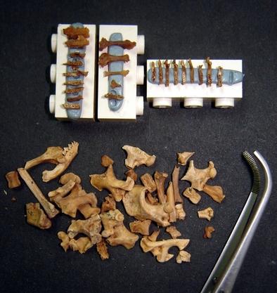 Restos de pequeños vertebrados susceptibles de ser radiodatados con la nueva técnica.
