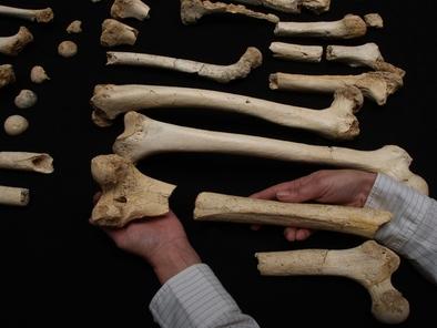 Restos de la Sima de los Huesos (Javier Trueba / Madrid Scientific Films)