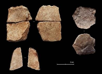Fósiles humanos descubiertos en la Cova de Bolomor (Tavernes de la Valldigna, Valencia) durante la campaña de excavaciones 2016.