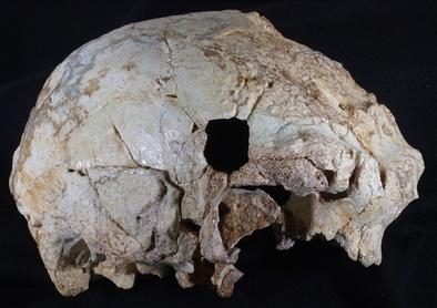 Cráneo de Aroeira 3