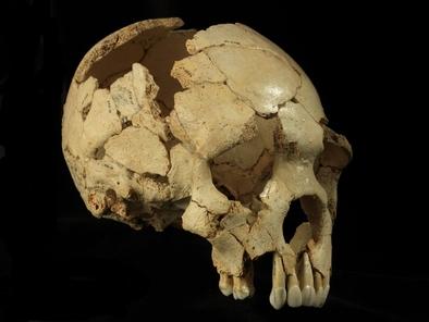 El Cráneo 6 de la Sima de los Huesos (Atapuerca, Burgos)