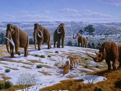 Manada de mamuts junto a un rinoceronte lanudo.