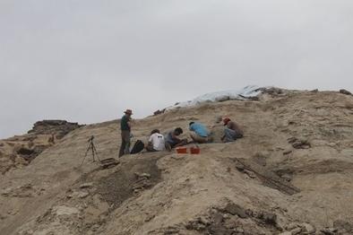 Excavación en Eritrea.