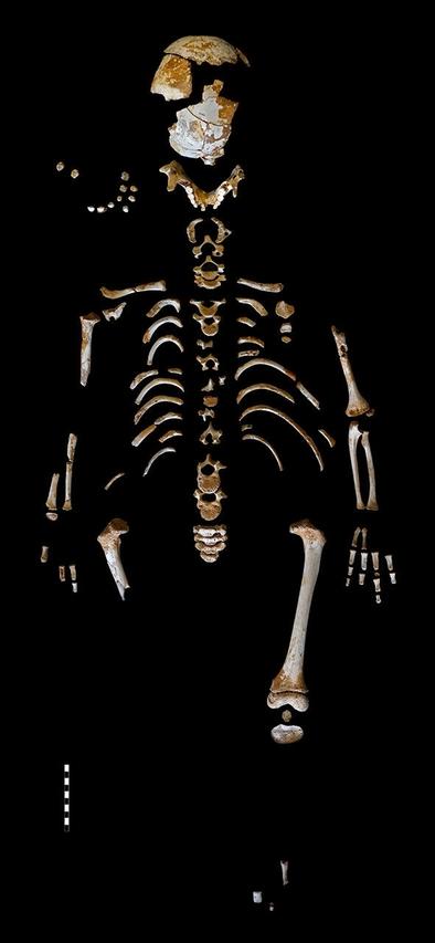 Esqueleto del niño neandertal hallado en la cueva asturiana de El Sidrón