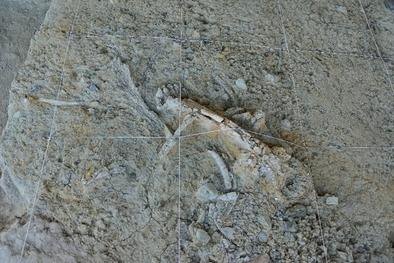 Suelo de excavación de la Cala 1 con un fémur de mamut (Mamuthus meridionalis) en el centro y otros restos de fauna e industria a su alrededor.