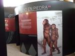 La Fundación Atapuerca muestra cuatro exposiciones sobre evolución humana en Jaén