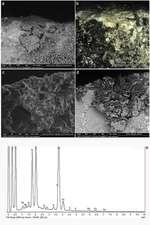 Se publica una colección de referencia de microresiduos
