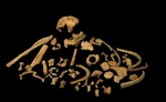 Vigésimo aniversario de Homo antecessor