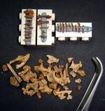 Dataciones radiocarbónicas de huesos diminutos gracias a una nueva técnica y a nuevos equipos