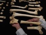 El ADN nuclear de los fósiles de la Sima de los Huesos confirma su parentesco con los neandertales