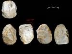 Nuevas pistas sobre las actividades cotidianas de los primeros humanos