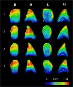 Sima de los Huesos y Neandertales: un poco más cerca gracias a un nuevo estudio sobre caninos